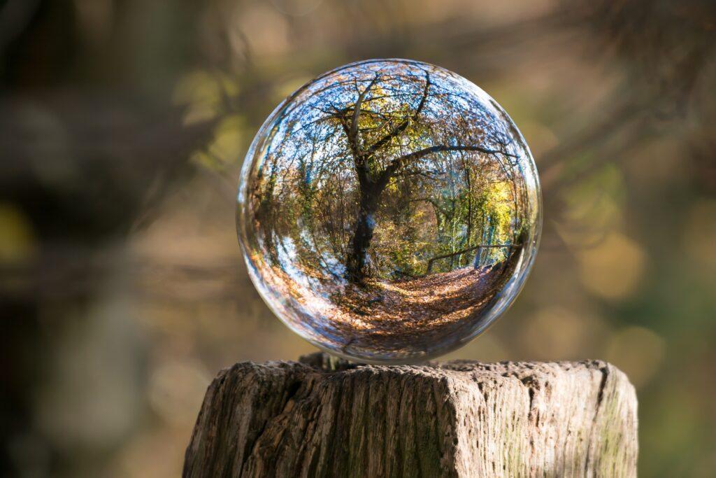 Wald Blick in die Zukunft